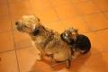 Lola ja Mila 1